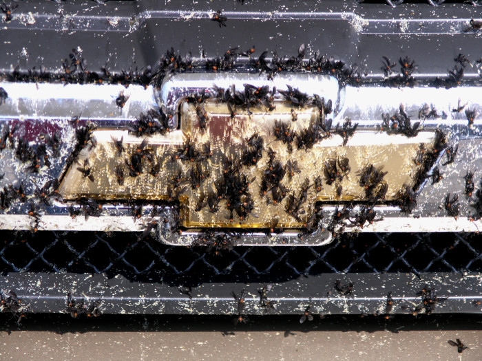 """5. You're not afraid to battle bugs…a lot of them. From giant mosquitoes to pesky """"love bugs,"""" insects are just a part of living in Mississippi."""