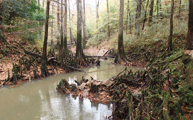 5. Cat's Den Cave Preserve, Eastern Smith County
