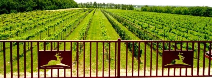6. Sip some wine at the Grace Hill Winery (Whitewater)