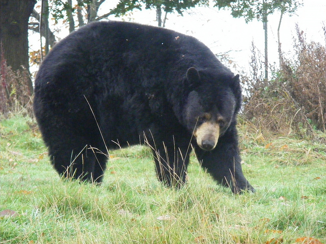 4. Black bear crashes through retired Pittsburgh teacher's windshield.