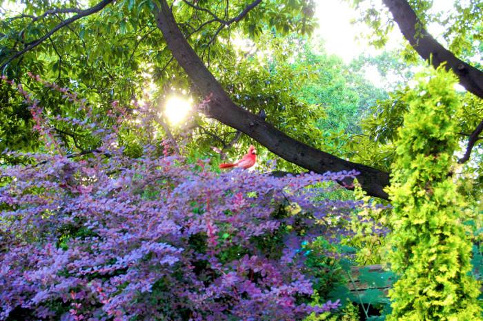 11) Cleveland Botanical Garden
