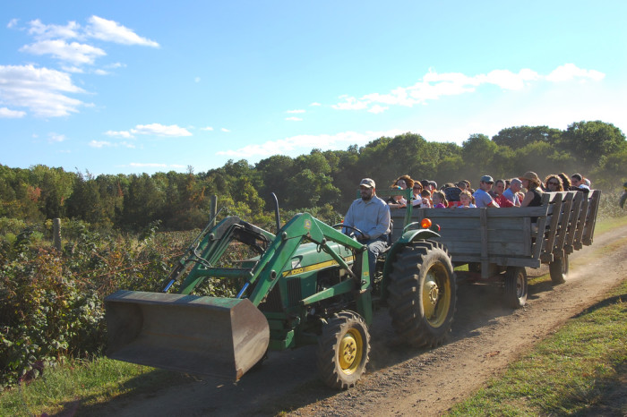 5. Gone for a scenic countryside cruise on a hayride.