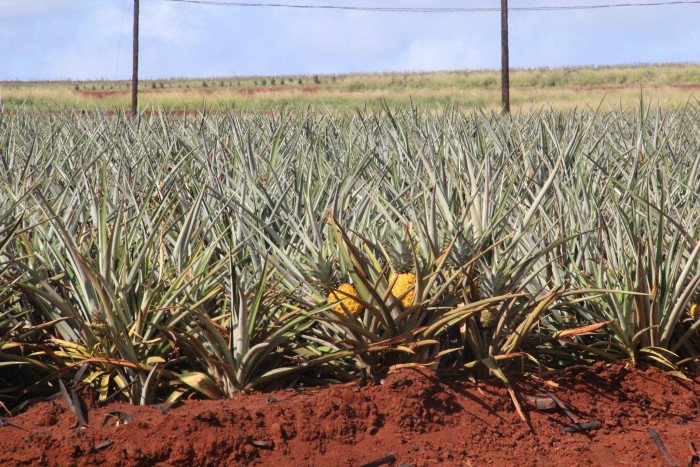 6) Fresh produce, specifically pineapple.