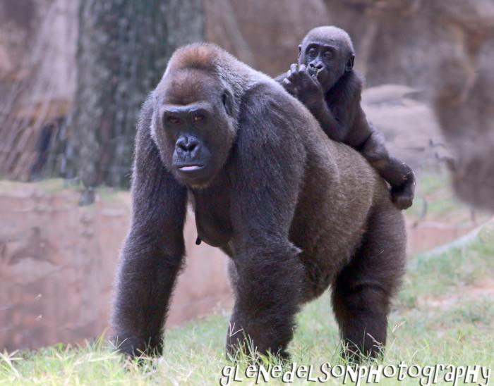 4) Zoo Atlanta