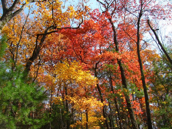 12) Bartram Trail, North Georgia