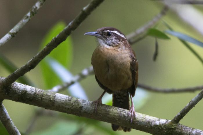 6. Natchez Trace Corridor Birding Trail