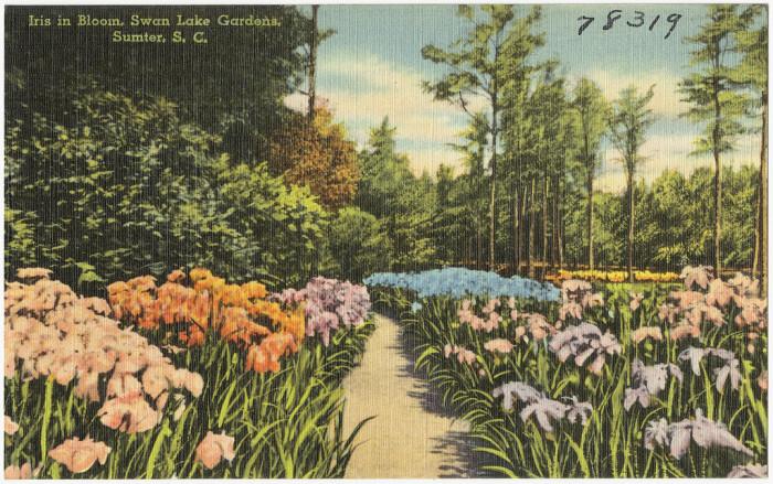 9. Swan Lake- Iris Gardens, Sumter