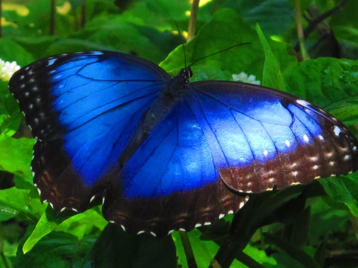 1. Butterfly World