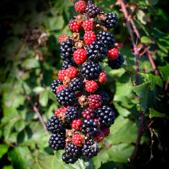 7. From honeysuckles to blackberries, eating from plants is totally acceptable.