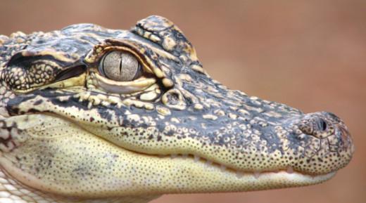 7. Sam D. Hamilton Noxubee National Wildlife Refuge, Noxubee, Oktibbeha, and Winston Counties