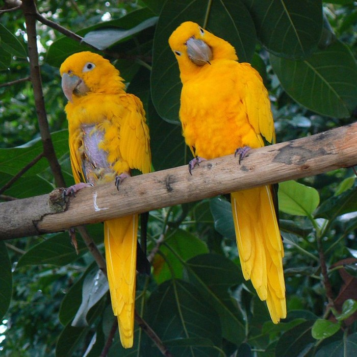 3. The National Aviary, Pittsburgh