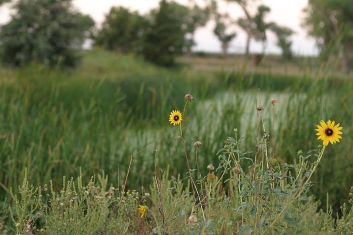 13.) Cimarron National Grassland (Elkhart)