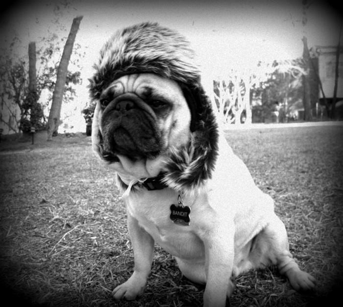 8. Dogs in hats...dogs in hats...dogs in hats....