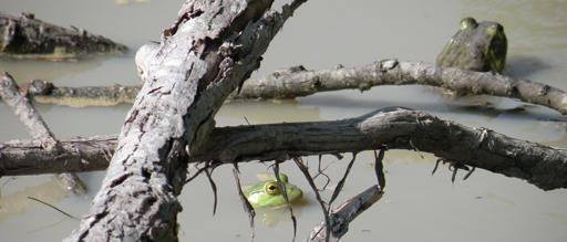 8. Panther Swamp National Wildlife Refuge, Yazoo and Humphreys Counties
