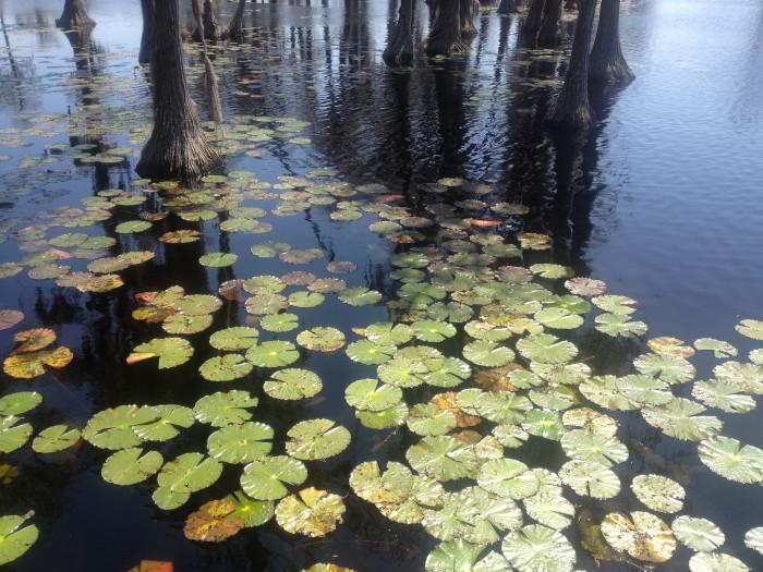 8) Banks Lake National Wildlife Refuge