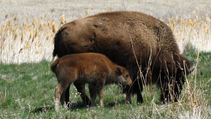 6) Antelope Island State Park