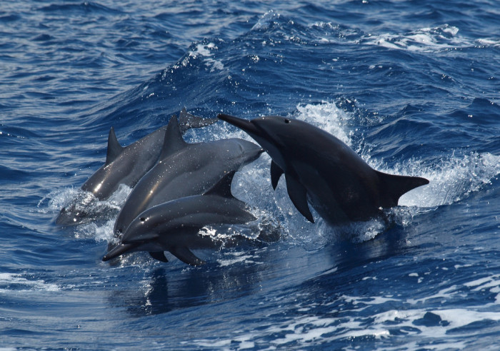 9) Dolphin sightings are absolutely breathtaking.
