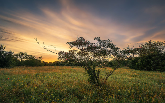 6) Flower Mound