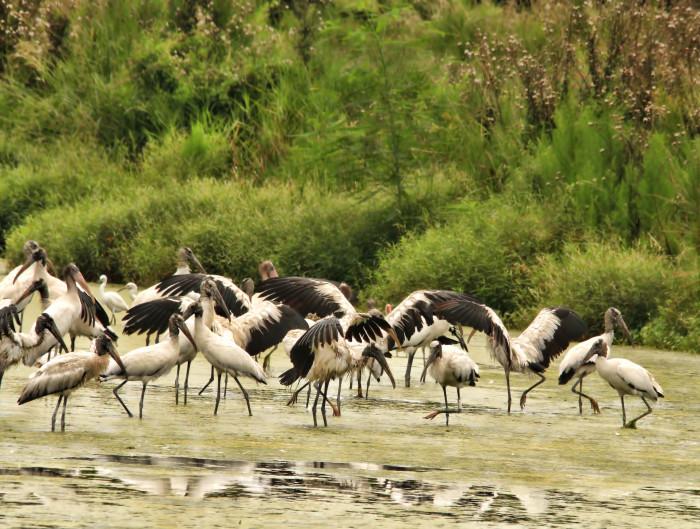 7) Harris Neck National Wildlife Refuge