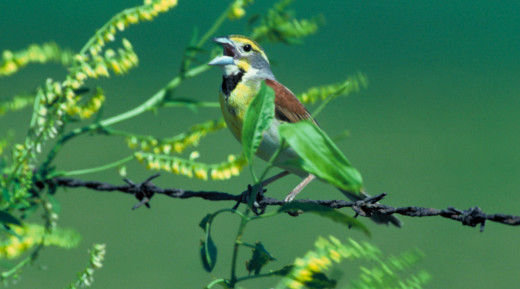 9. Tallahatchie National Wildlife Refuge, Grenada and Tallahatchie Counties