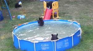 What They Spotted In Their New Jersey Backyard Is INSANELY ADORABLE!