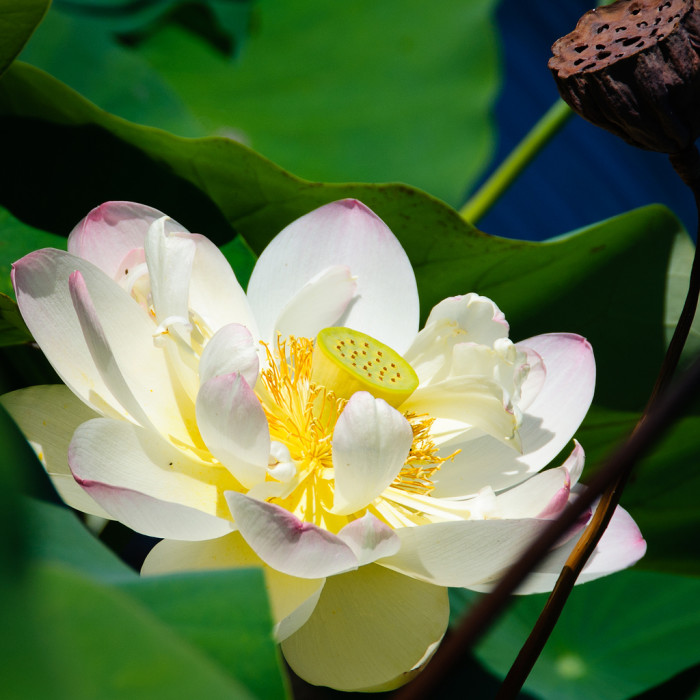 3. Botanical Gardens: Norfolk and Richmond