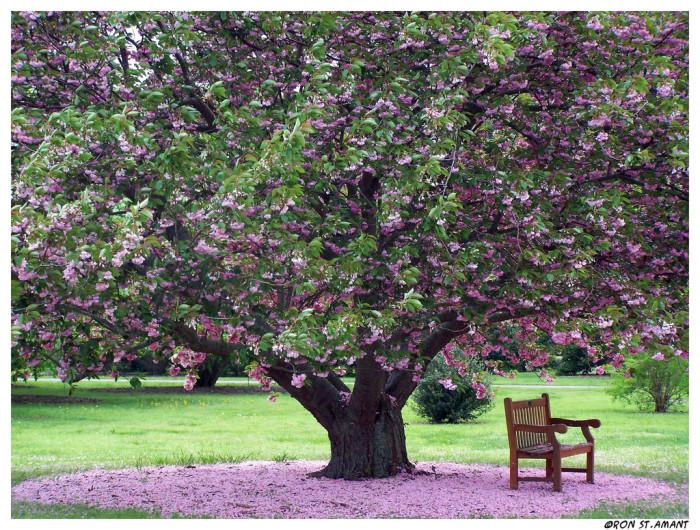 Botanical Garden Purple Tree