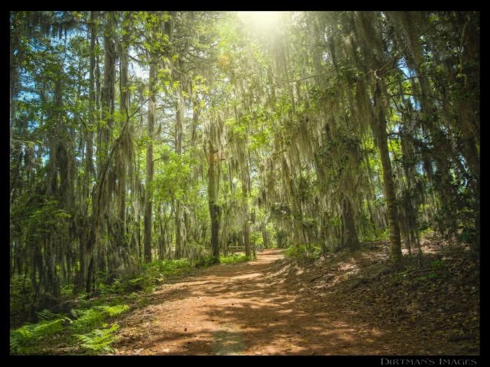 6. Cape Henry Trail, First Landing State Park, Virginia Beach