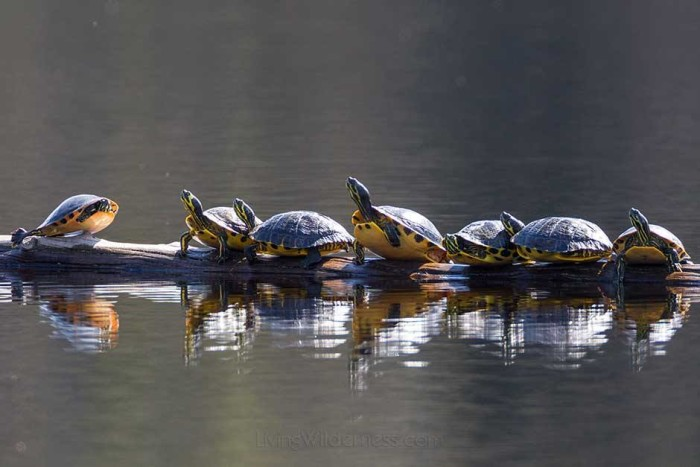 12. Carolina Sandhills National Wildlife Refuge, McBee