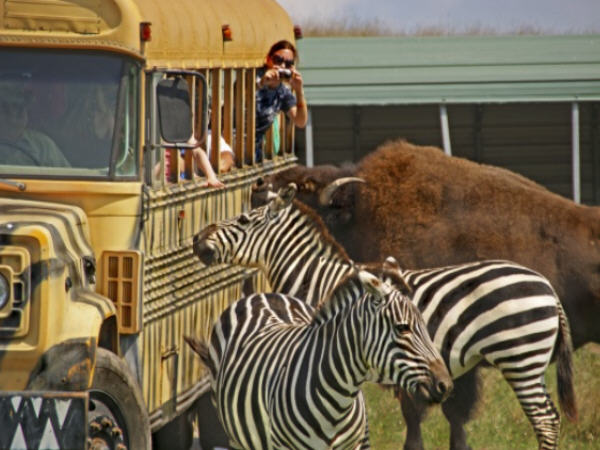 12. Fort Chiswell Animal Park, Wytheville