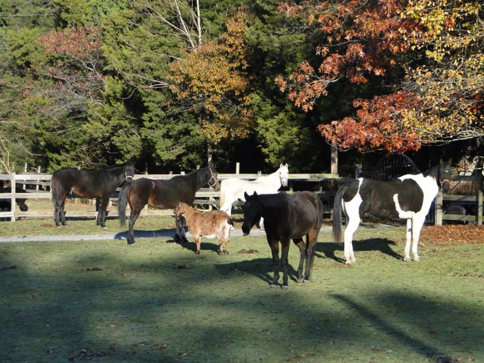 10 Little Known Places In New Jersey Where Animal Lovers
