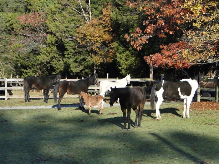 5. Funny Farm Rescue Animal Sanctuary, Mays Landing