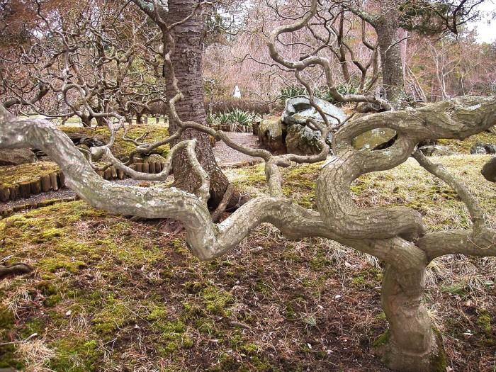 4. Sister Mary Grace Burns Arboretum, Lakewood