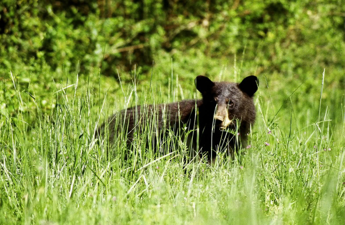 5. Great Dismal Swamp National Wildlife Refuge, Suffolk