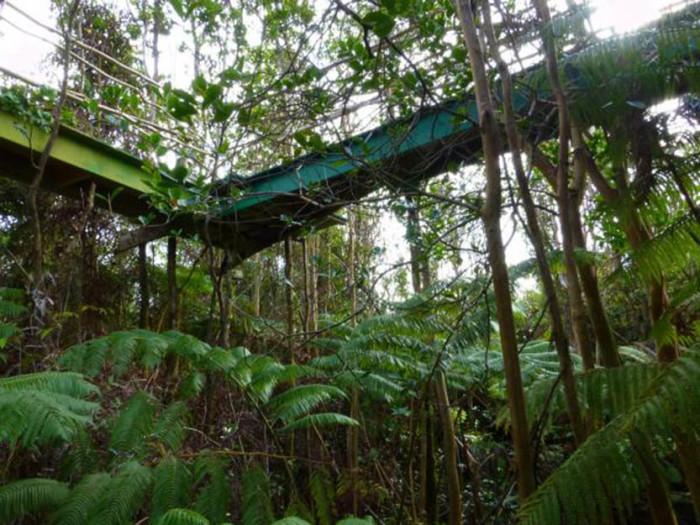 Hawaii Volcano Treehouse 2