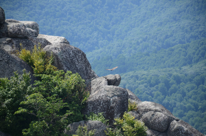 10. Watching a Hawk off of Old Rag
