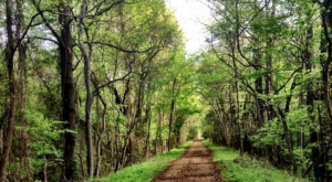 10 Trails In Mississippi You Must Take If You Love The Outdoors