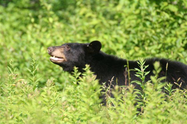 7. Scherman Hoffman Wildlife Sanctuary, Bernardsville