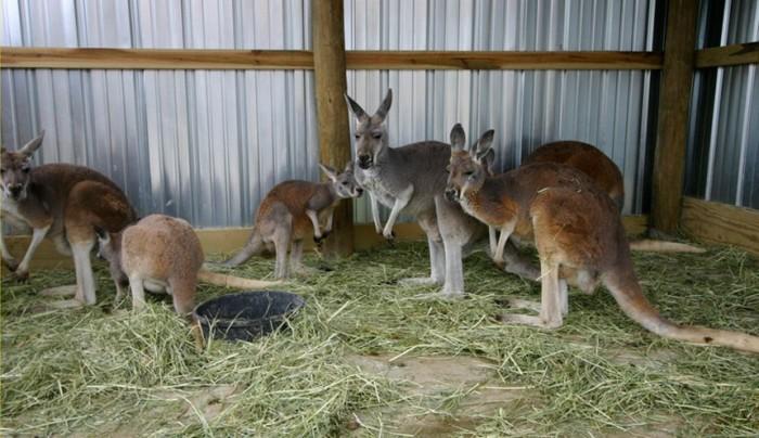 6) Safari Adventures Animal Park (Sandusky)