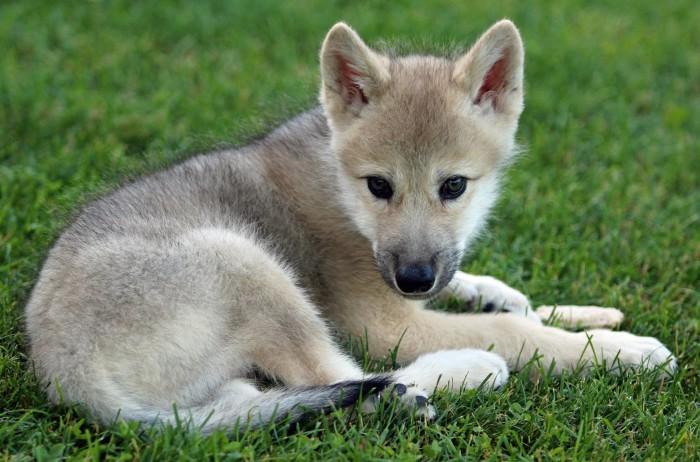 2. Lakota Wolf Preserve, Columbia