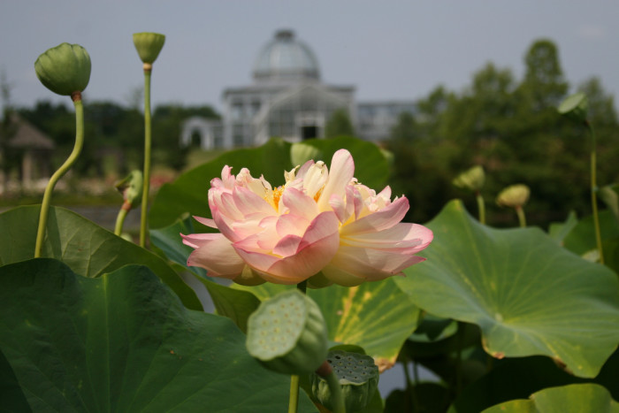 3. Lewis Ginter Botanical Gardens, Richmond