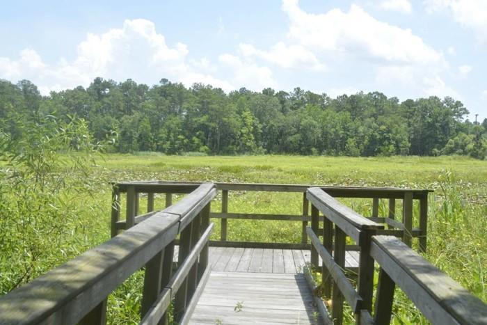 15. Marrington Plantation, Goose Creek