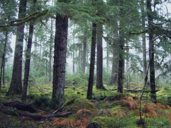6) Take cover under the trees in an old-growth rain forest.