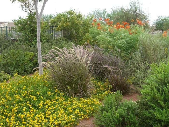 5. Acacia Demonstration Gardens - Henderson, NV