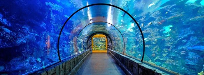 10. Check out the famous Shark Reef Aquarium at Mandalay Bay.