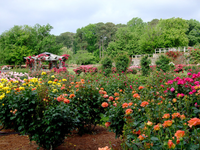 Here are the 13 most beautiful gardens in virginia for Norfolk botanical garden norfolk va