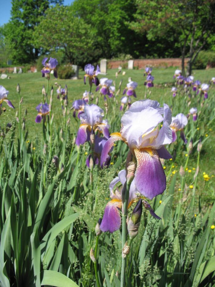 9. Old City Cemetery, Lynchburg
