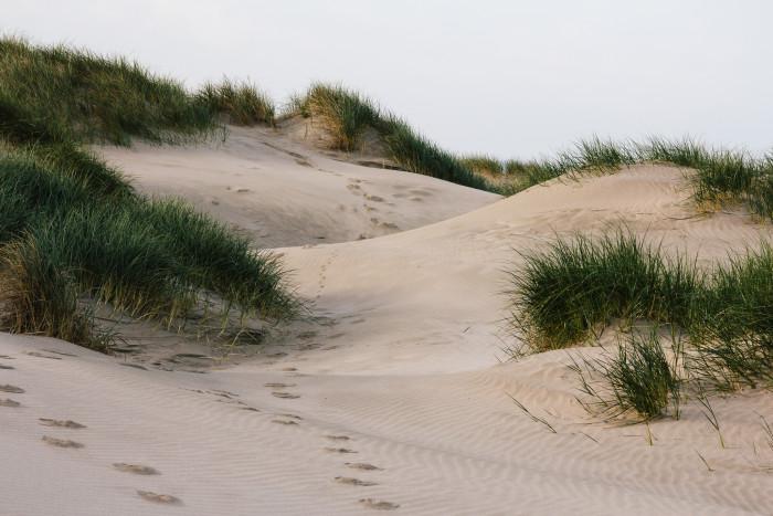 7) Oregon Dunes