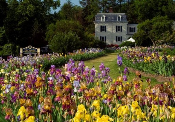 Presby Memorial Iris Gardens, Upper Montclair