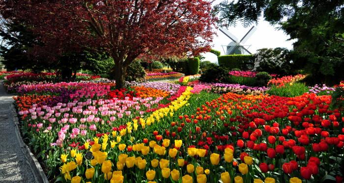 Beautiful Gardens In Washington